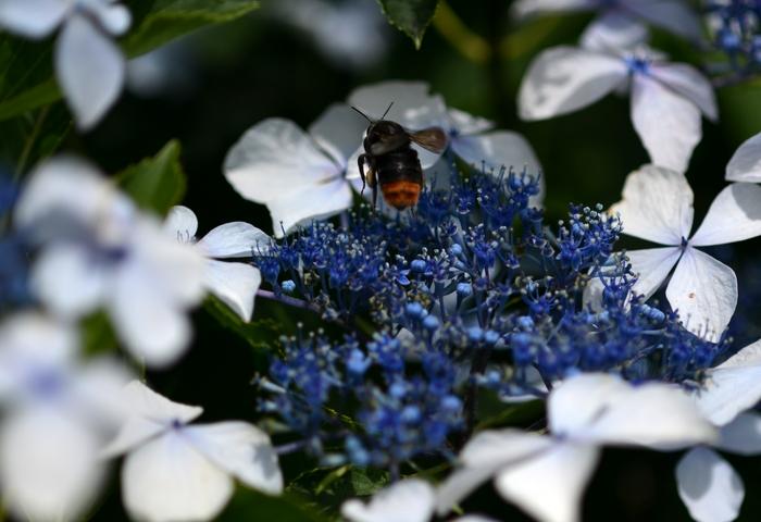 昆虫たち-1