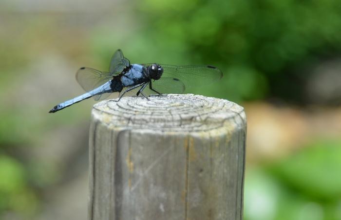 昆虫たち-3
