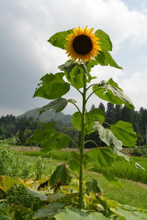里山の花-1
