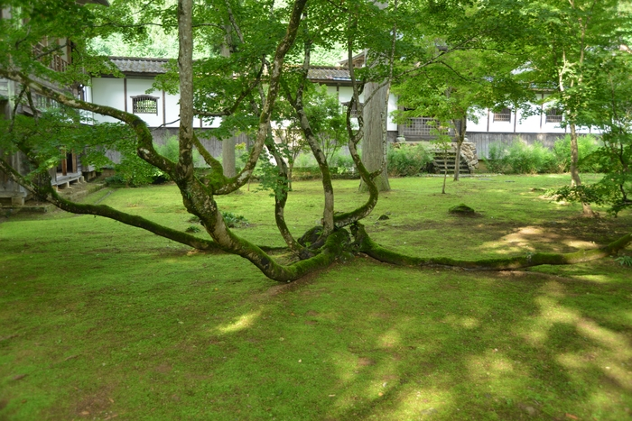 寺の樹-1