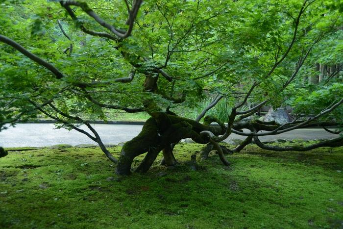 寺の樹-2