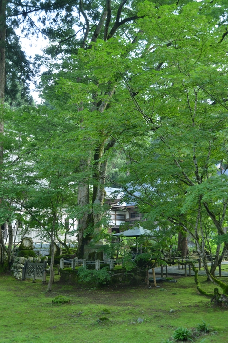 寺の樹-3