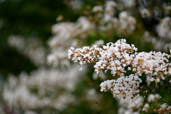 道端の花-1
