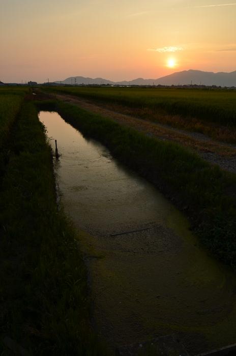 田の夕暮れ-1