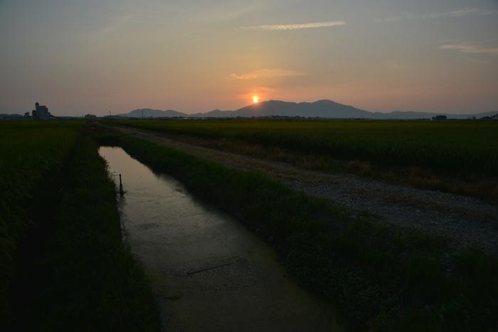 田の夕暮れ-3