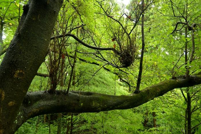 初秋の林-3