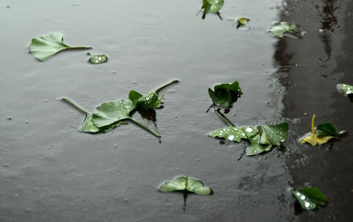 台風の雨-2