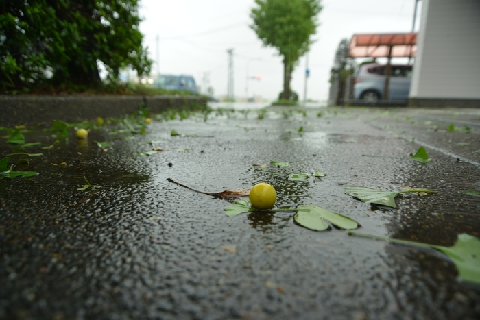 台風の雨-3
