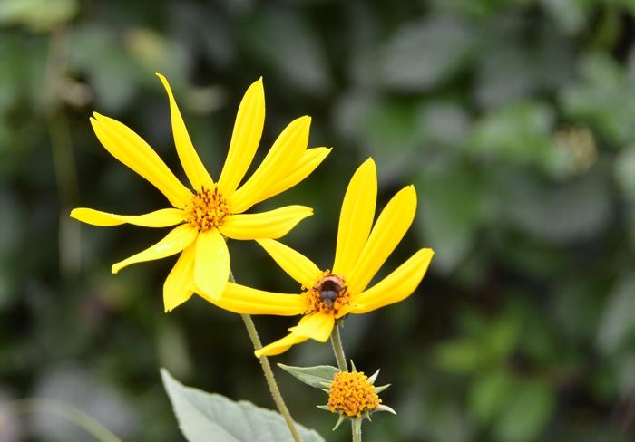 秋の花-3