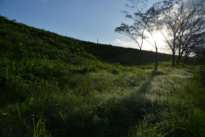 朝の日射し-3