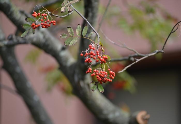 秋の赤い実-1