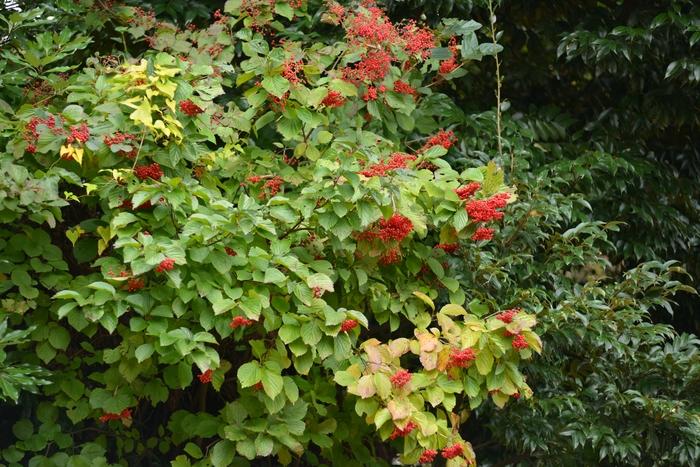 秋の赤い実-3