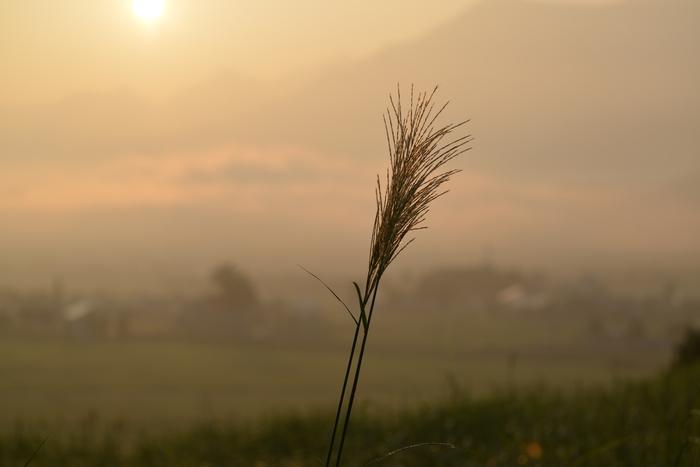 秋近し 朝焼け-1