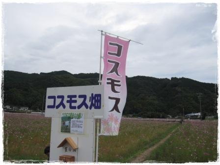 IMG_3815.jpg