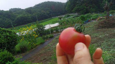 tomato_2013080600300576d.jpg
