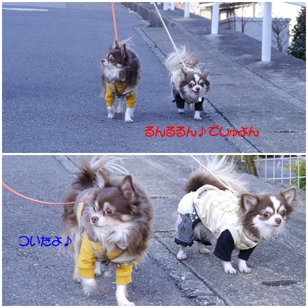 あるけ~cats