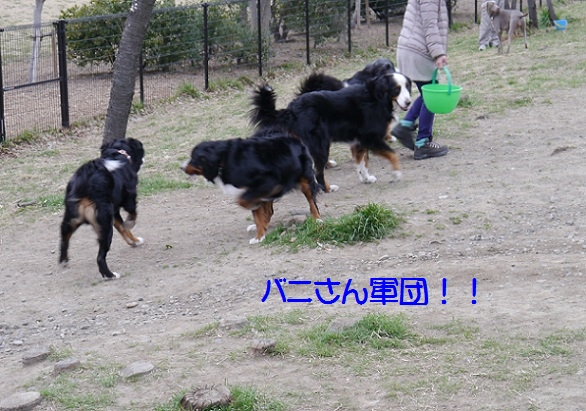 P1050107banisazu.jpg