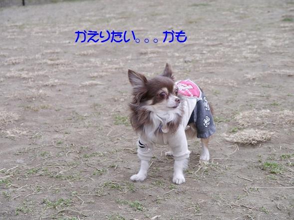 P1050114katamaru.jpg