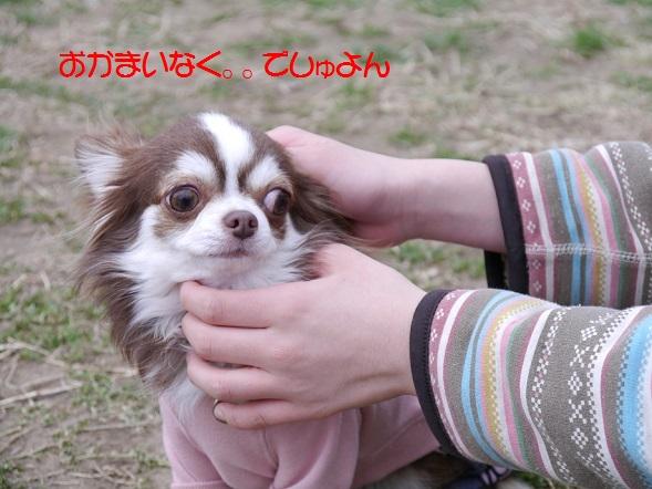 P1050118okamainaku2.jpg
