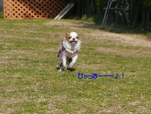P1050278rokokunsissou-.jpg