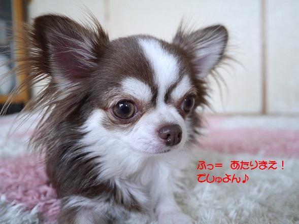 P1050642yuzuyuzukawaii.jpg
