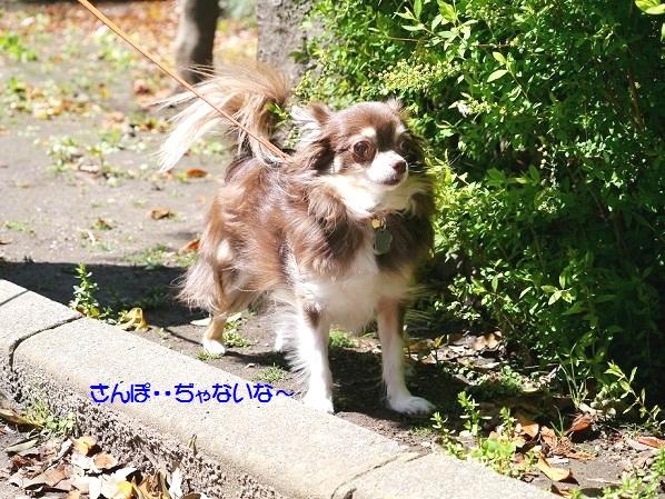 P1050894dokoikunokanadayo.jpg