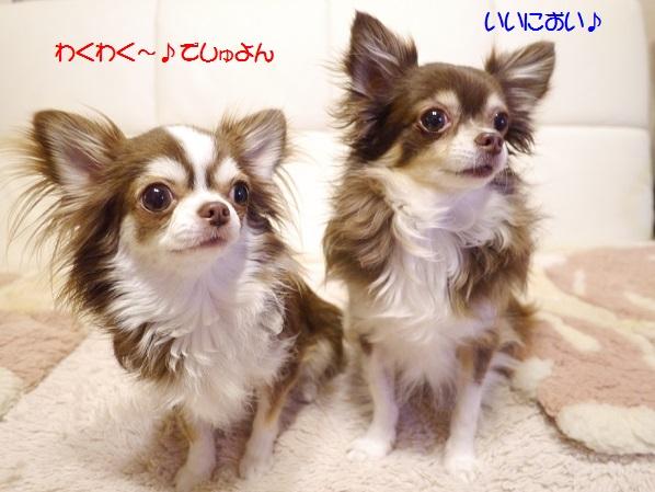 P1050921wakuwaku.jpg