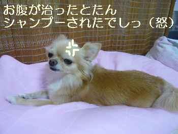 blog2011081903.jpg