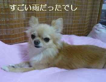 blog2011082101.jpg