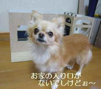 blog2011082303.jpg