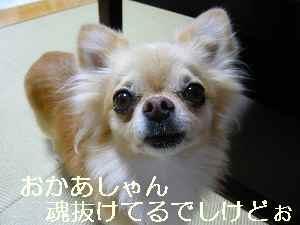 blog2011082504.jpg