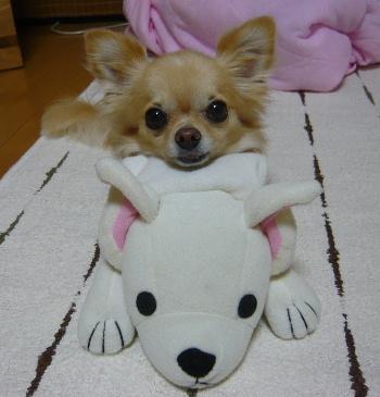 blog2011082701.jpg