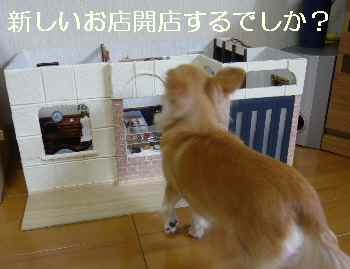 blog2011082904.jpg