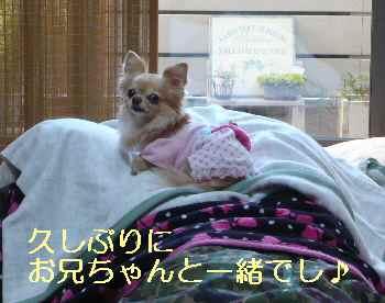 blog2013031501.jpg
