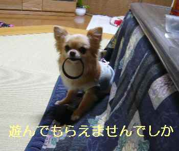 blog2013031802.jpg