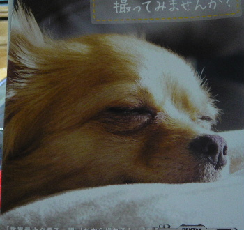 blog2013032904.jpg