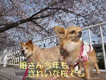 blog2013040103.jpg