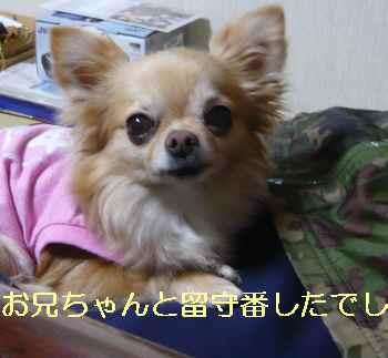 blog2013040801.jpg