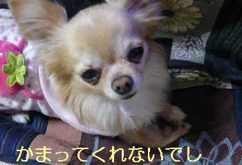 blog2013041504.jpg