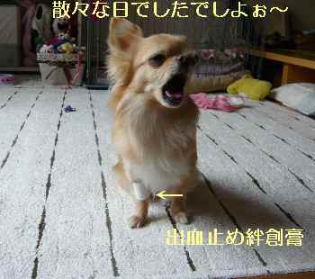 blog2013042603.jpg