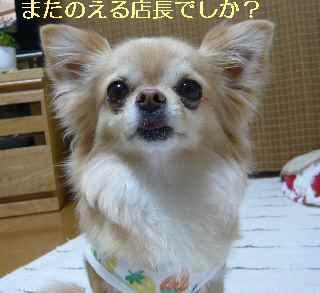 blog2013042806.jpg
