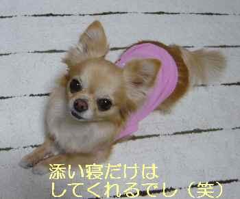 blog2013050903.jpg