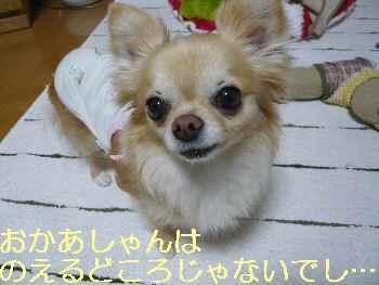 blog2013051603.jpg