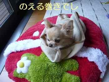 blog2013051701.jpg