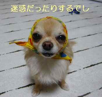 blog2013052001.jpg