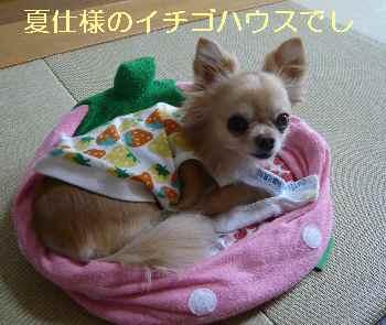 blog2013052201.jpg
