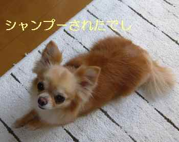 blog2013052301.jpg