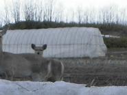 ブログ1鹿