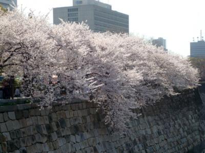 20130405大阪城桜2