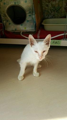 アウス猫;圭君①